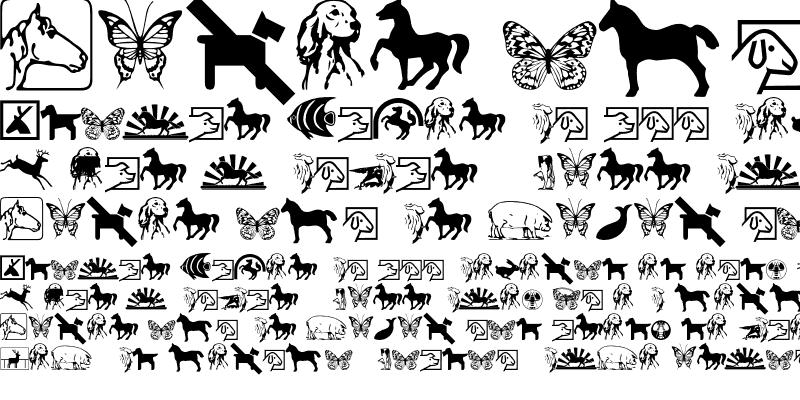 Sample of Animals P01 Regular