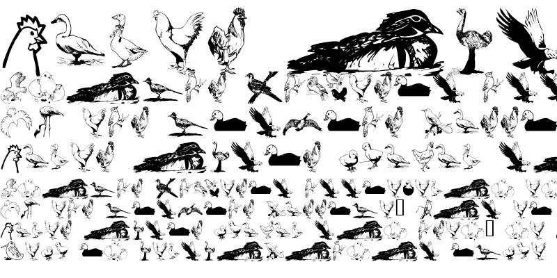 Sample of AnimalsAnimalsBirds