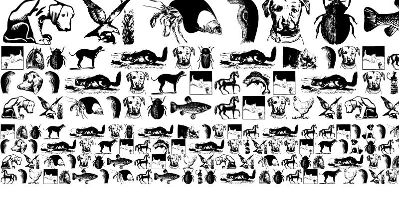 Sample of AnimalsOldfashion Regular