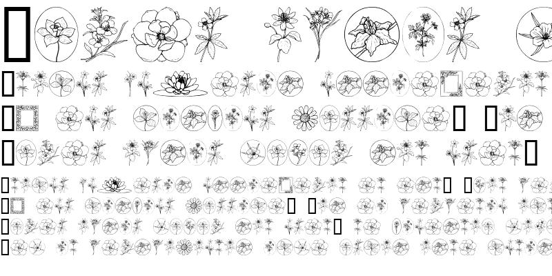 Sample of Wildflower III